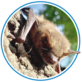 bat removal in Toronto